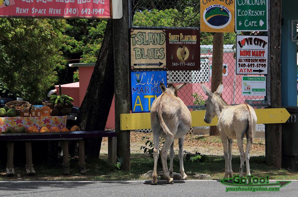 Donkeys on St John Island like to shop too!