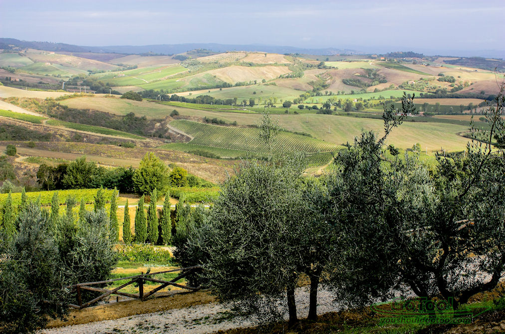 View of Vineyards in Tuscany Italy