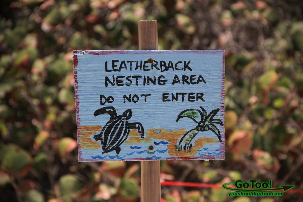Leatherback Sea Turtles Nesting on Zoni