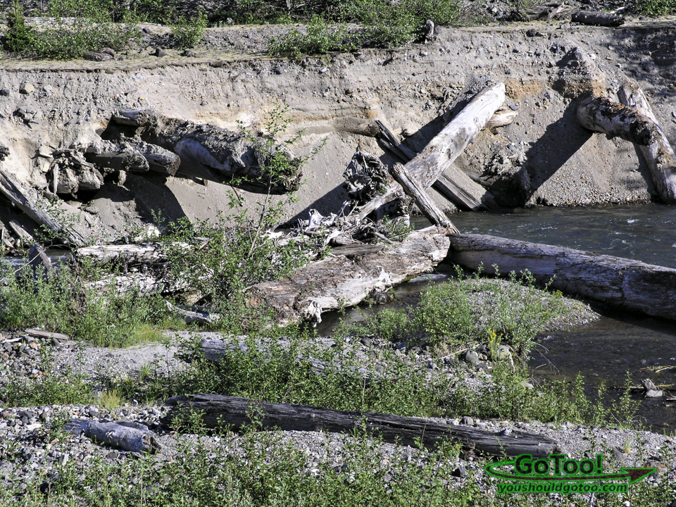 Trees Embedded in Ash and Debris Along the River Bank Mt St Helens