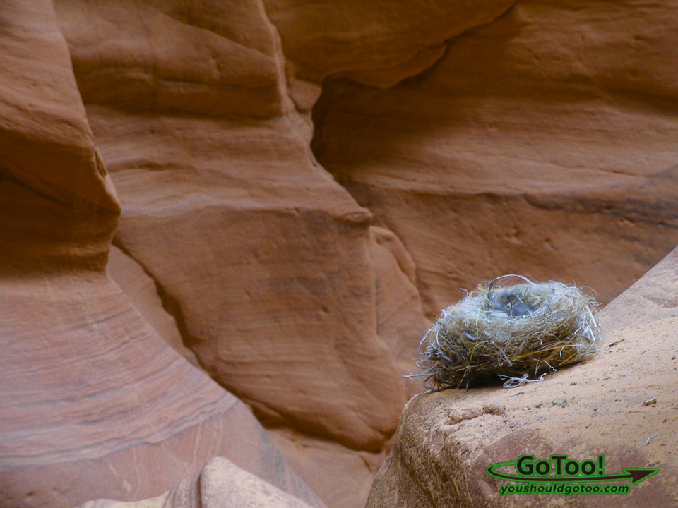 Bird Nest With Blue Feathers In Antelope Canyon