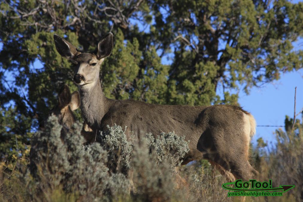 Deer Utah
