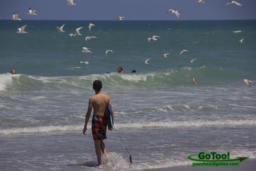 Florida Beach and Birds