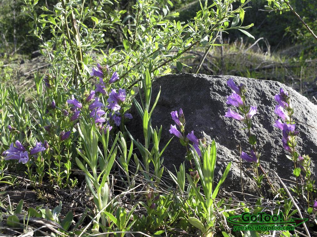 Flowers Washington