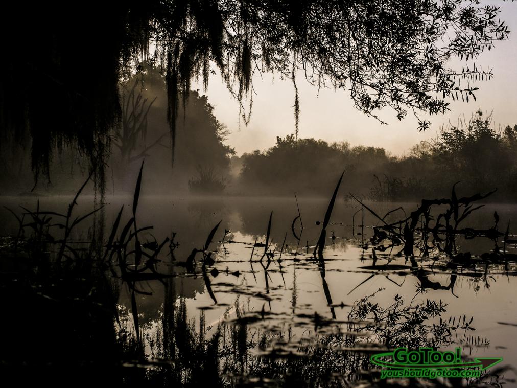 Foggy Water Florida