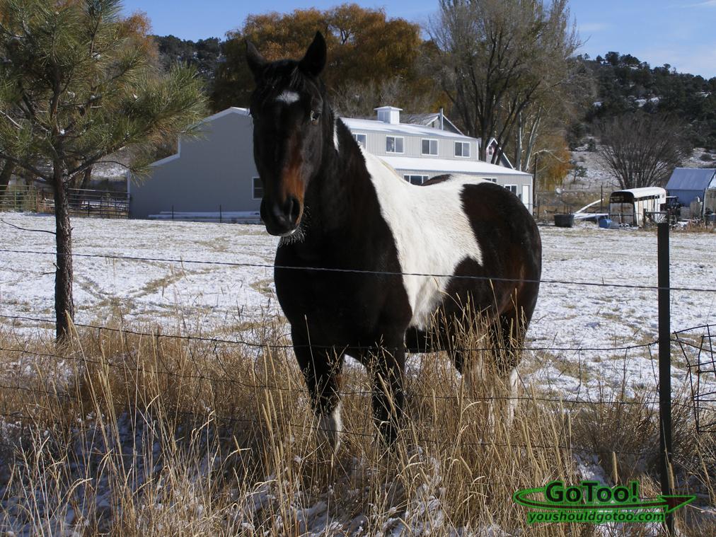 Horse in Pasture Colorado