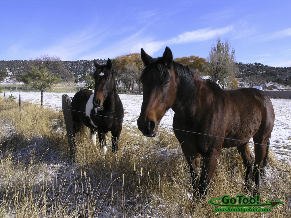 Horses in the Snow Colorado