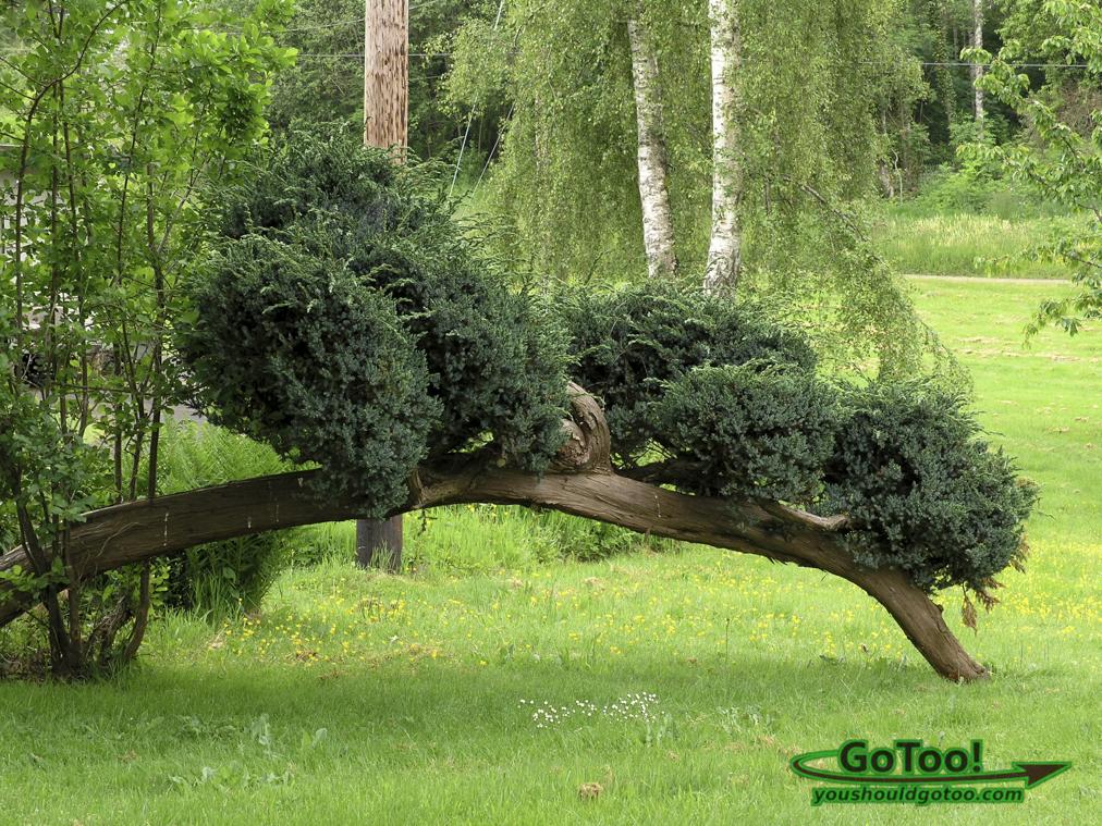 Strange Tree Washington