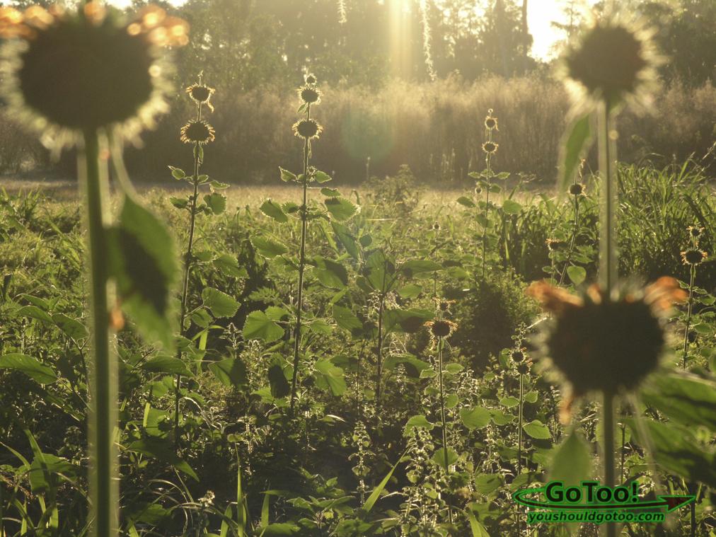 Sun through plants Florida
