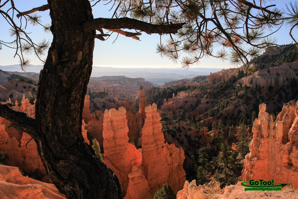 Bryce Canyon Hoodoos Forest View Sunrise